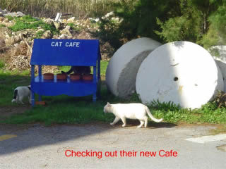 Cats Checking Out Cat Cafe. Copyright Catalist.Gr and BritsinCrete